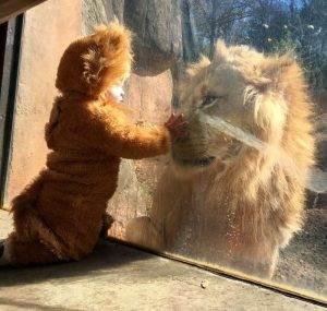 toddler-dressed-lion-costume-aryeh-zoo-atlanta-5