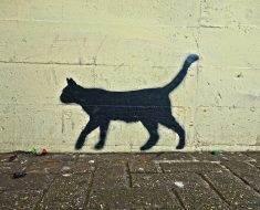 Katze an Wand