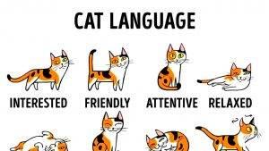 Wie man seine Katze besser verstehen kann (Englisch)