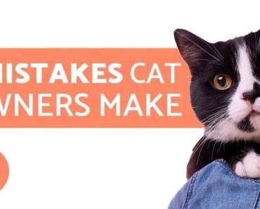 7 Fehler, die jeder Katzenbesitzer macht