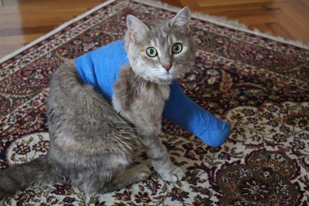 Katze Hat Blut Im Stuhl
