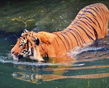 Wenn Katzen baden gehen