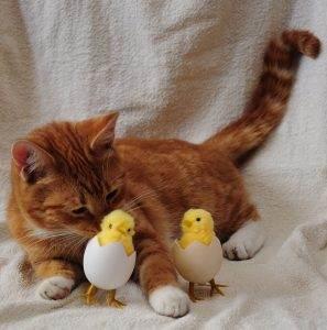 Was dürfen Katzen essen? 3