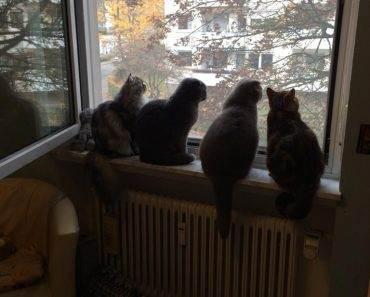 Mit Katze umziehen – 12 Tipps zum reibungslosen Ablauf
